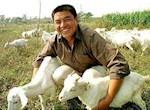 如何(he)提高農村家庭養羊經濟效益